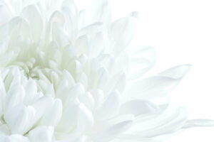 musitext_header_background_flower2